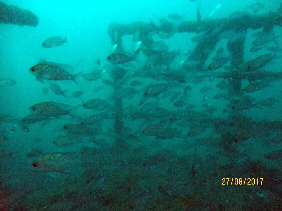 ban de poisson