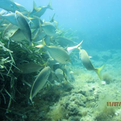 Img 265banc de poissons 1